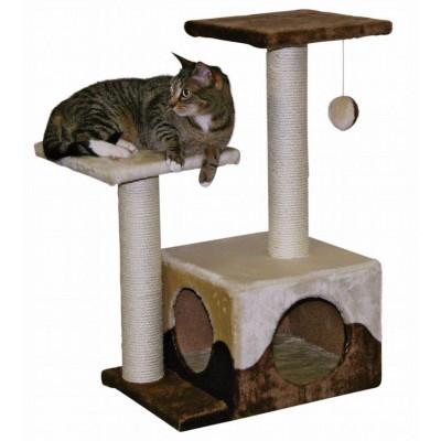 Kočičí strom Saphir