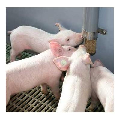 Zásobník PigDig
