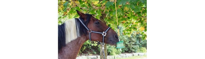 Lizy pro koně